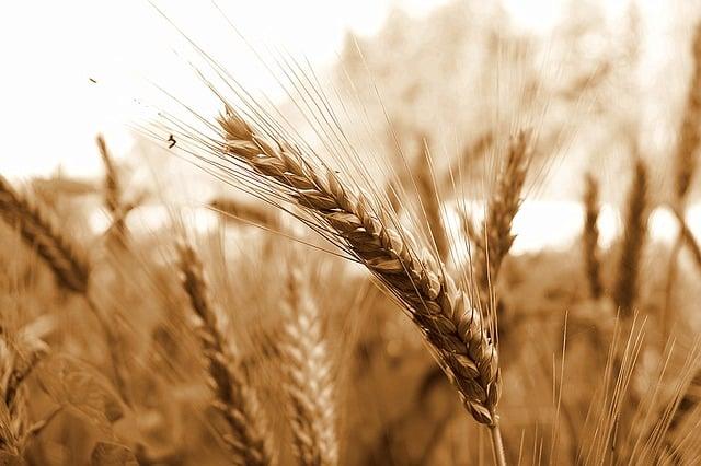 Glutenintoleranz führt zu Durchfall