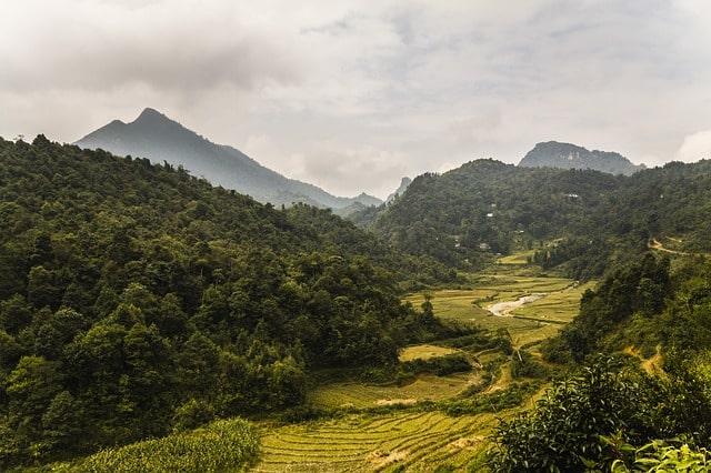 Vietnam als Herkunft des Kampferbaumes