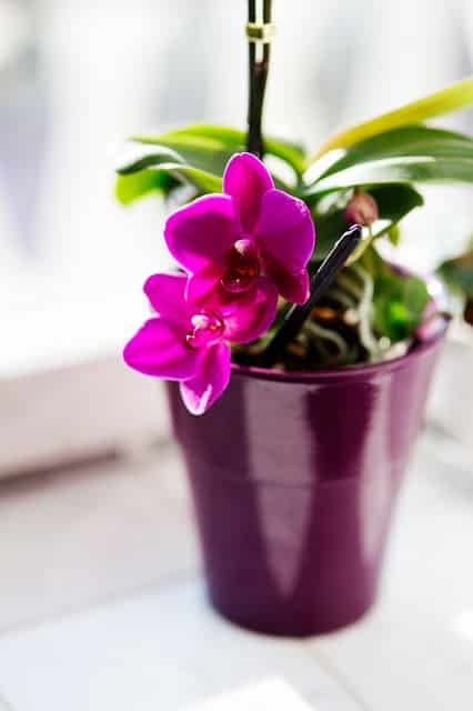 Blumen im Urlaub bewässern