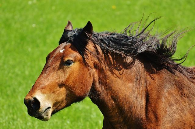Entgiftung bei Pferden