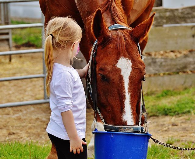 Gewichtsreduktion bei Pferden