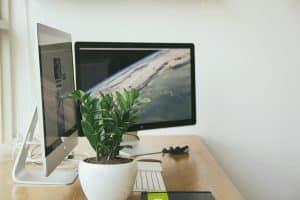 Bild Pflanze am Arbeitsplatz