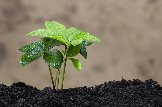 Bild gedüngte Pflanze