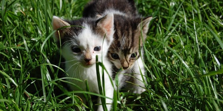 Bild Katzenbabys draußen