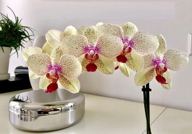 Bild Orchidee