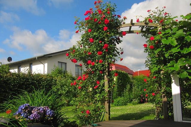 Bild Rosenbogen