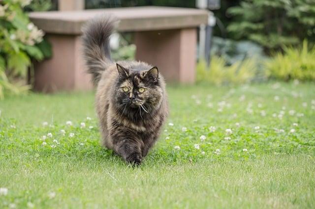 Bild Katze im Garten