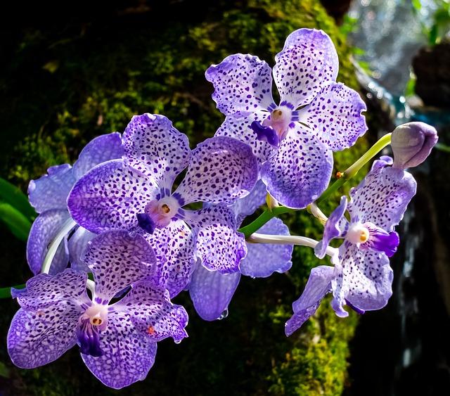 richtiger standort f r orchideen