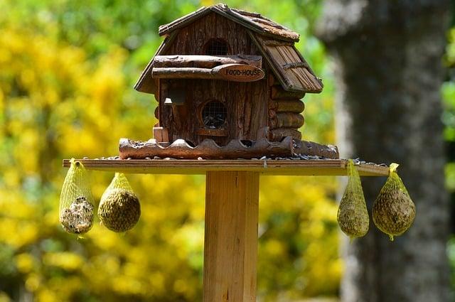 Vogelhaus Selber Bauen Was Beachten