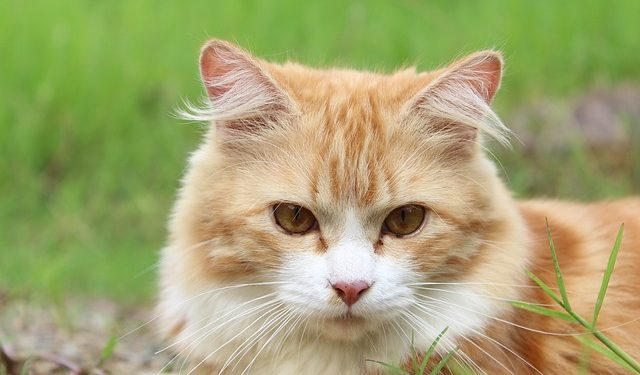 Katze verliert Fell