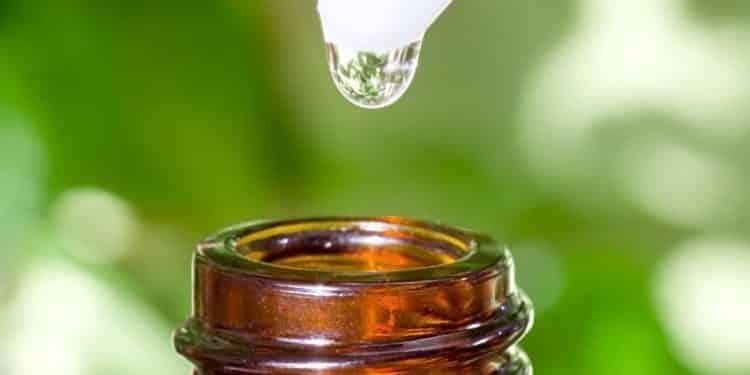 Bild: Teebaum Öl