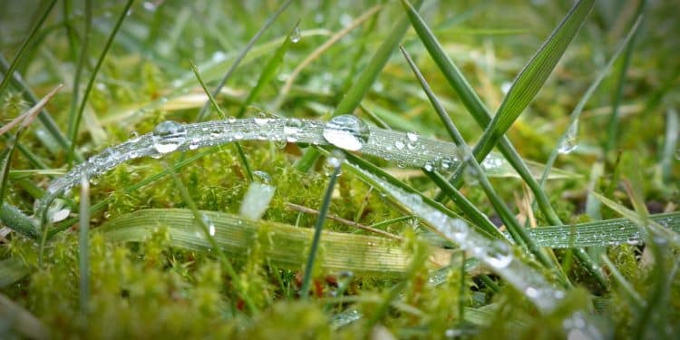 Bild Moos im Rasen