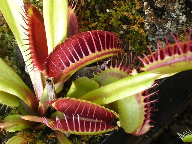 Bild fleischfressende Pflanze