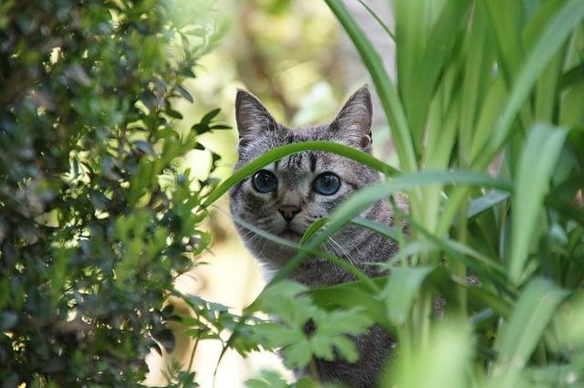 Bild Katze im Gebüsch