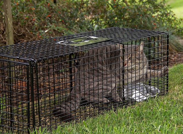 Bild Katzenfalle